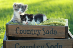 Kittens Outdoors in Natural Light Royalty Free Stock Photography