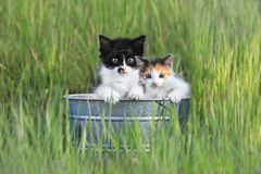 Kittens Outdoors in Tall Green Grass Stock Images