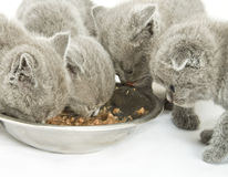 Kittens over white Stock Photography