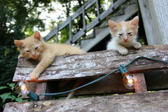 Kittens on pallet natural sunlight stock images