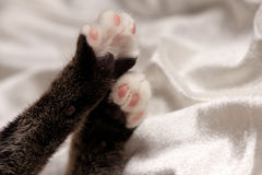 Kittens Paws on White Satin Stock Photo