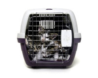 Kittens in pet carrier Royalty Free Stock Image