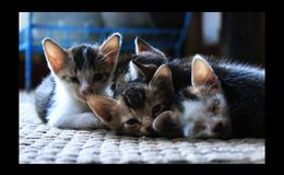 Kittens cats pets Stock Image
