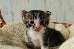 kittens Piccole, creature adorabili immagini stock