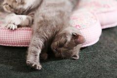 Kittens on pillow Stock Images
