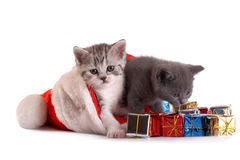 Kittens play with gifts Royalty Free Stock Images