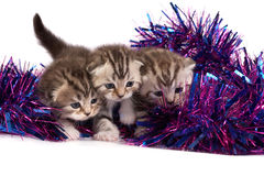 Kittens play with a tinsel Stock Photos