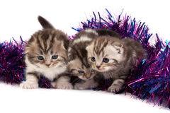 Kittens play with a tinsel Royalty Free Stock Image