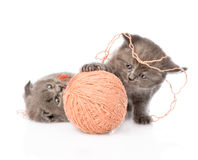 Kittens playing with a ball. isolated on white background Royalty Free Stock Images