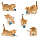 Kittens playing with a Christmas toy Royalty Free Stock Photos
