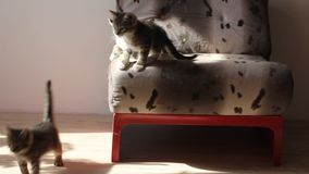 Kittens jumping from the chair down. stock video footage