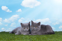 Kittens playing in the grass on a sunny summer day Royalty Free Stock Photography