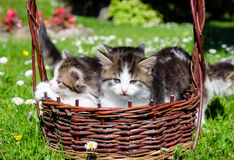 Kittens playing outdoor Stock Photos