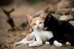 Kittens playing on the rock. Stock Images