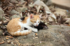 Kittens playing on the rock. Royalty Free Stock Images