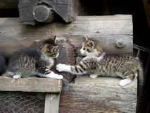 Kittens playing on stacked wood Royalty Free Stock Photos