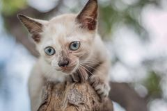 Kittens playing in a tree.0 stock image