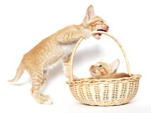 Kittens playing Stock Photo