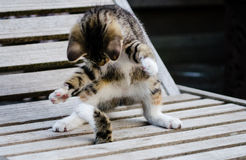 Kittens playing. On a wooden garden chair Stock Photo