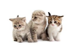 Kittens plays on a white background Royalty Free Stock Photos