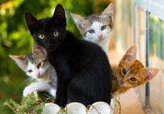 Kittens in a pot Royalty Free Stock Images