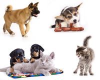 Kittens and puppy. Cat and puppy in whit backround, set Stock Photos