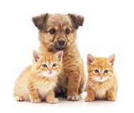 Kittens and puppy. Kittens and puppy on a white background Royalty Free Stock Image