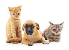 Kittens and puppy. Stock Photo