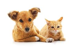 Kittens and puppy. Kittens and puppy on a white background Stock Images