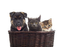 Kittens and a puppy Stock Image