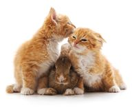 Kittens and rabbit. On a white background stock images
