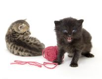 Kittens with red ball of yarn on white background Stock Image