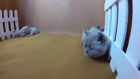 Kittens resting on an orange background, white fence