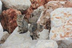 Kittens on the rocks Stock Photos