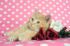 Kittens and roses for Valentines Day Royalty Free Stock Photography