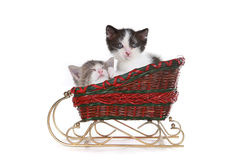 Kittens in a Santa Christmas Sleigh Royalty Free Stock Photo