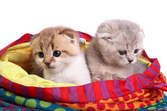 Kittens sit in a bag Stock Images