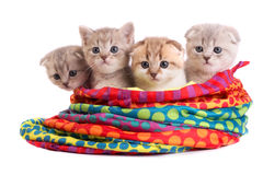 Kittens sit in a bag Stock Photography