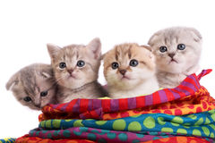 Kittens sit in a bag Stock Photo