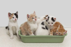 Kittens sitting in cat toilet Stock Images