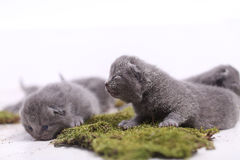 Kittens sitting on a green moss Stock Photos
