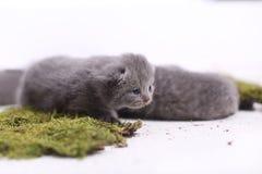 Kittens sitting on a green moss Stock Photo