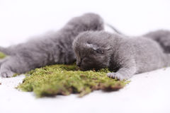 Kittens sitting on a green moss Royalty Free Stock Images
