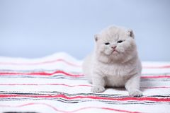 Kittens sitting on small carpet, cute face stock photography