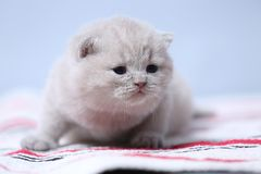 Kittens sitting on small carpet, cute face stock images