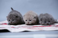Kittens sitting on small carpet, cute face up royalty free stock photos