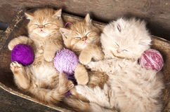 Kittens   sleeping Stock Photos