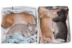 Kittens sleeping in boxes Royalty Free Stock Photography