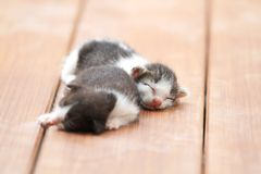 Kittens sleeping. On brown wooden floor Royalty Free Stock Image