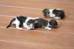 Kittens sleeping. On brown wooden floor Royalty Free Stock Photos